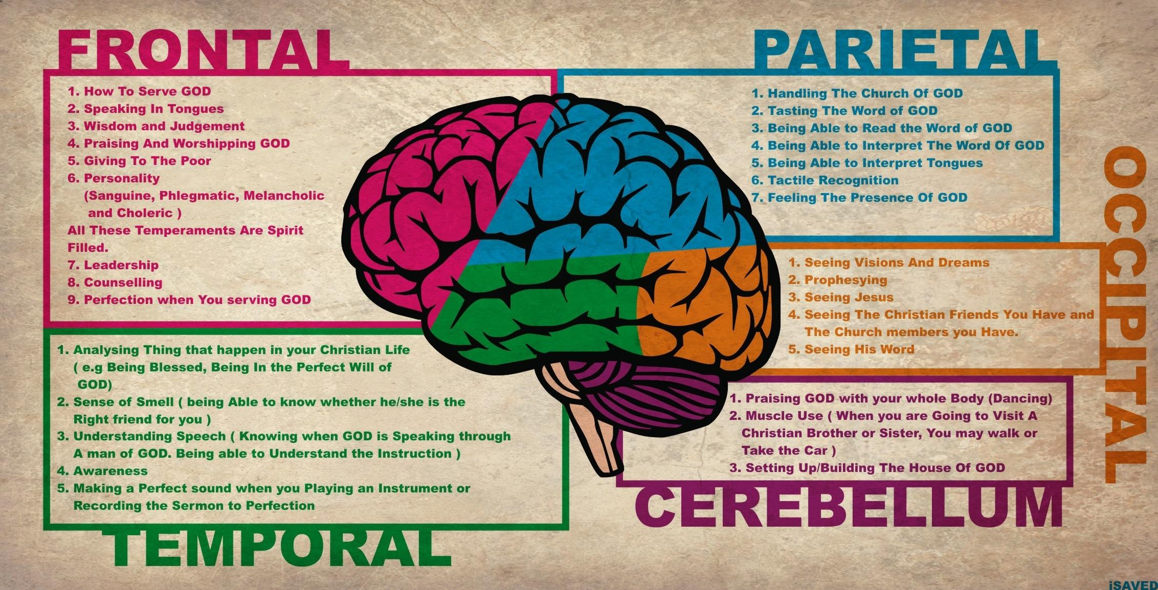 Human Brain Anatomy And Functions Human Brain Anatomy