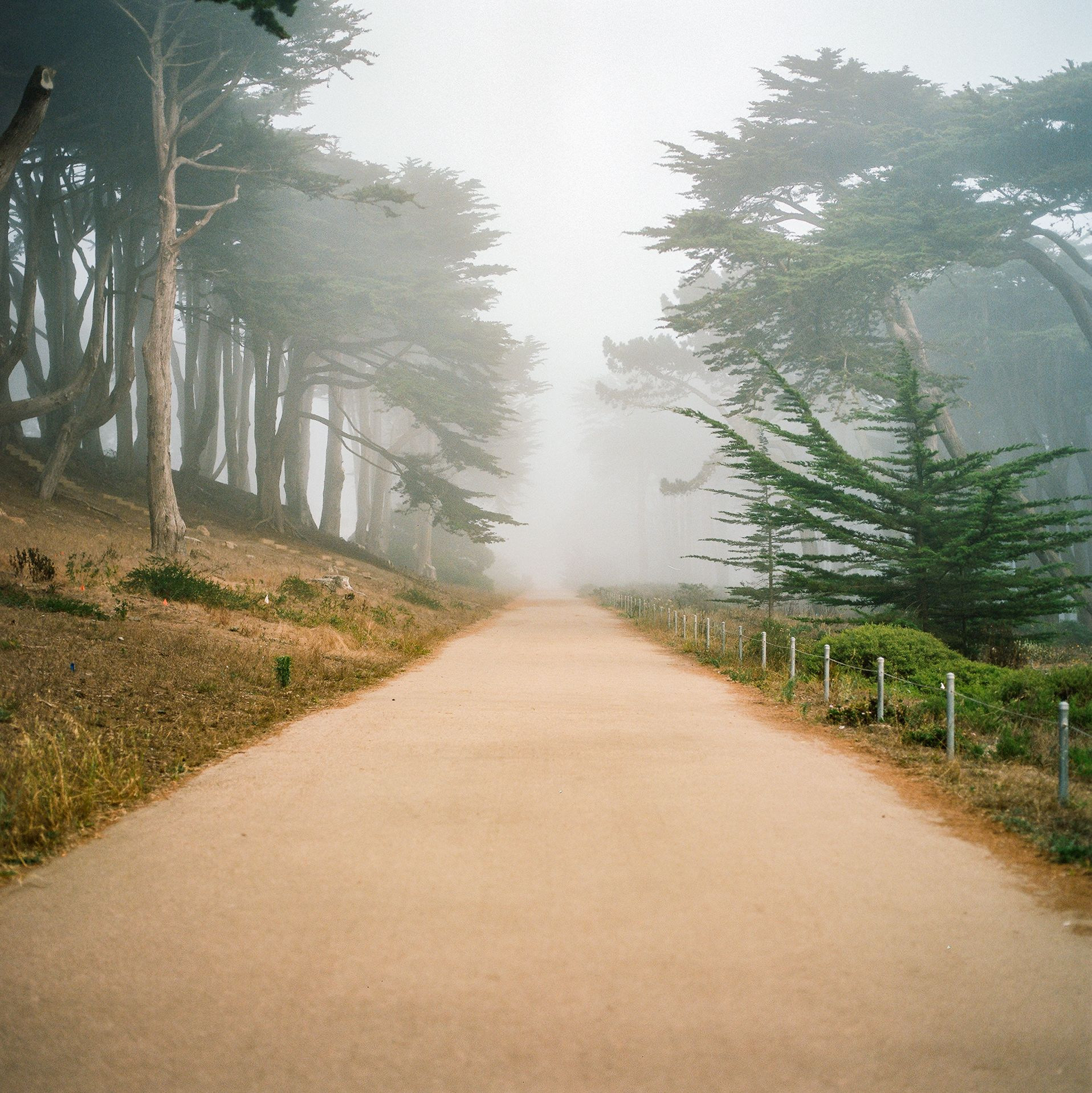 Lands End, San Francisco