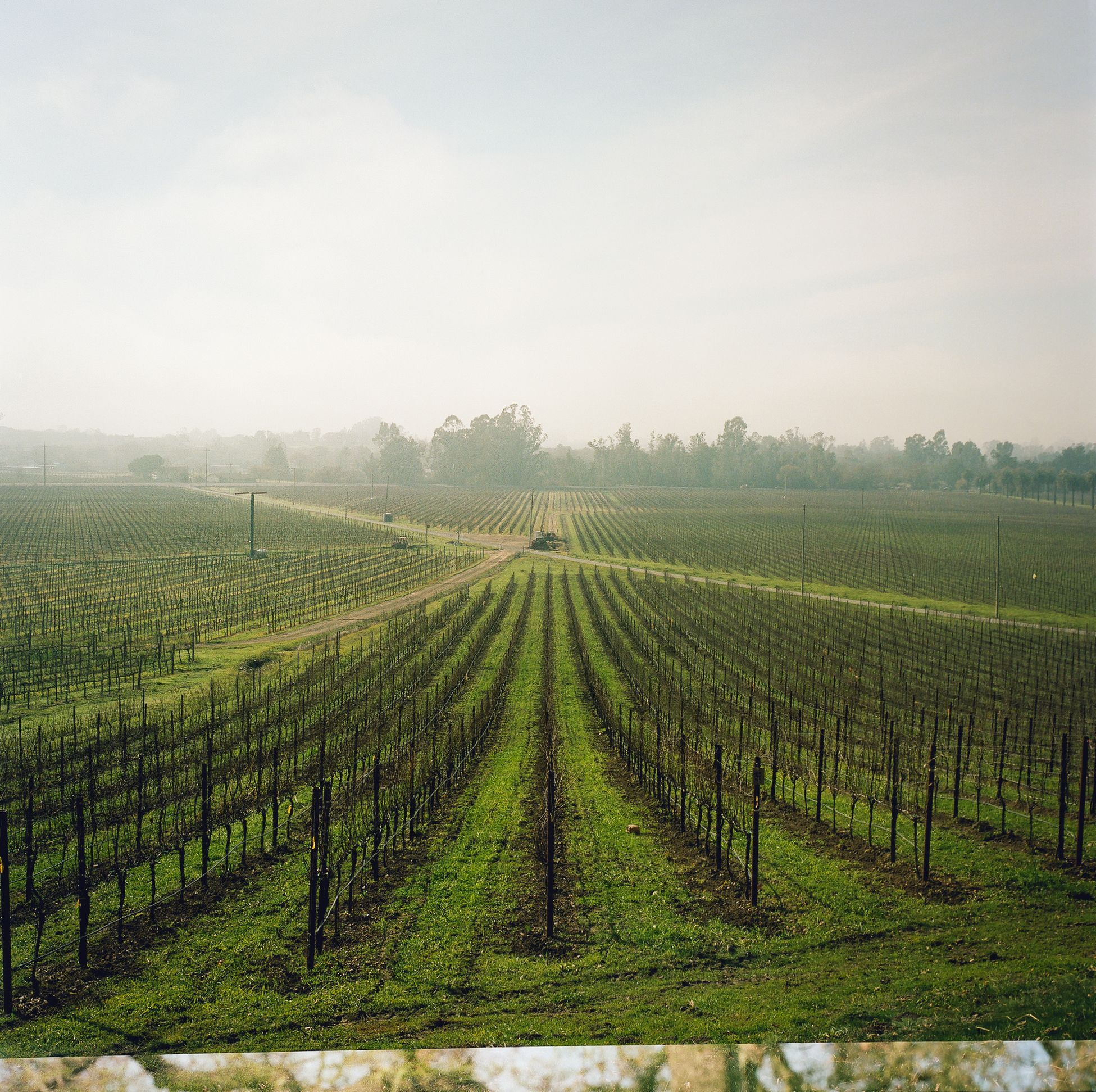 Scribe Vineyards