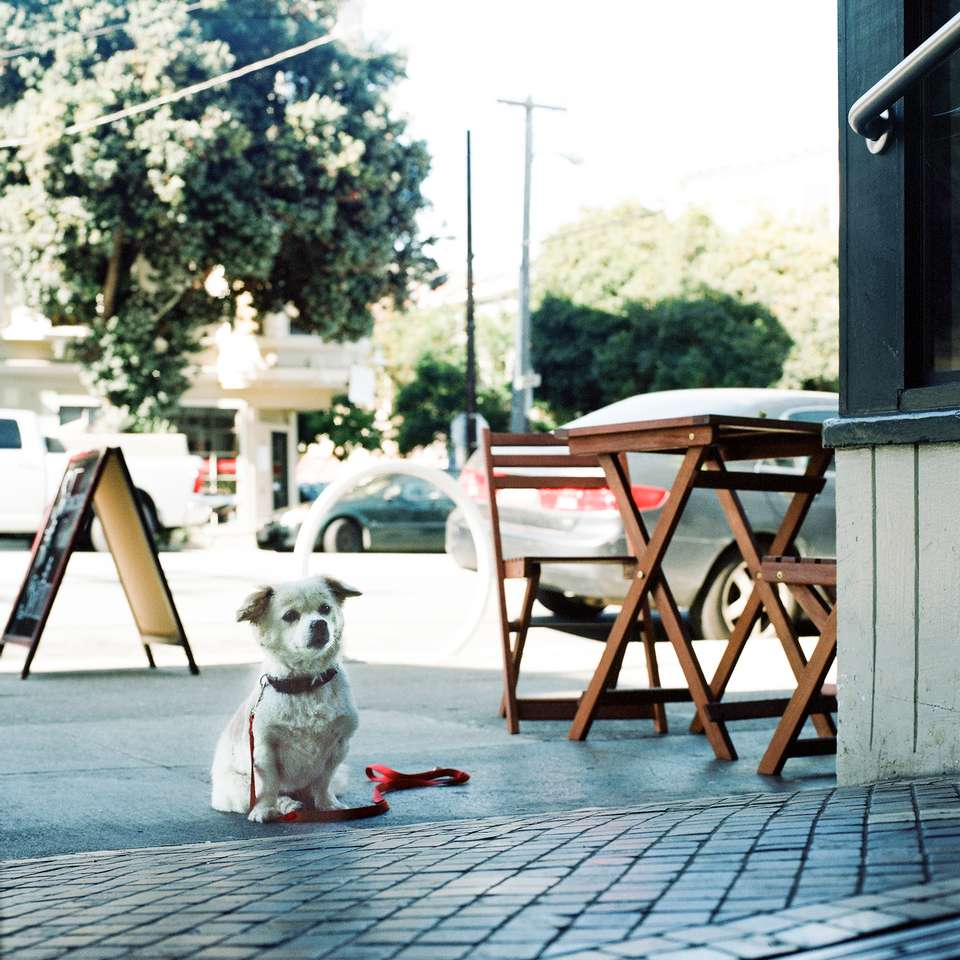 Lonely Dog Chronicles