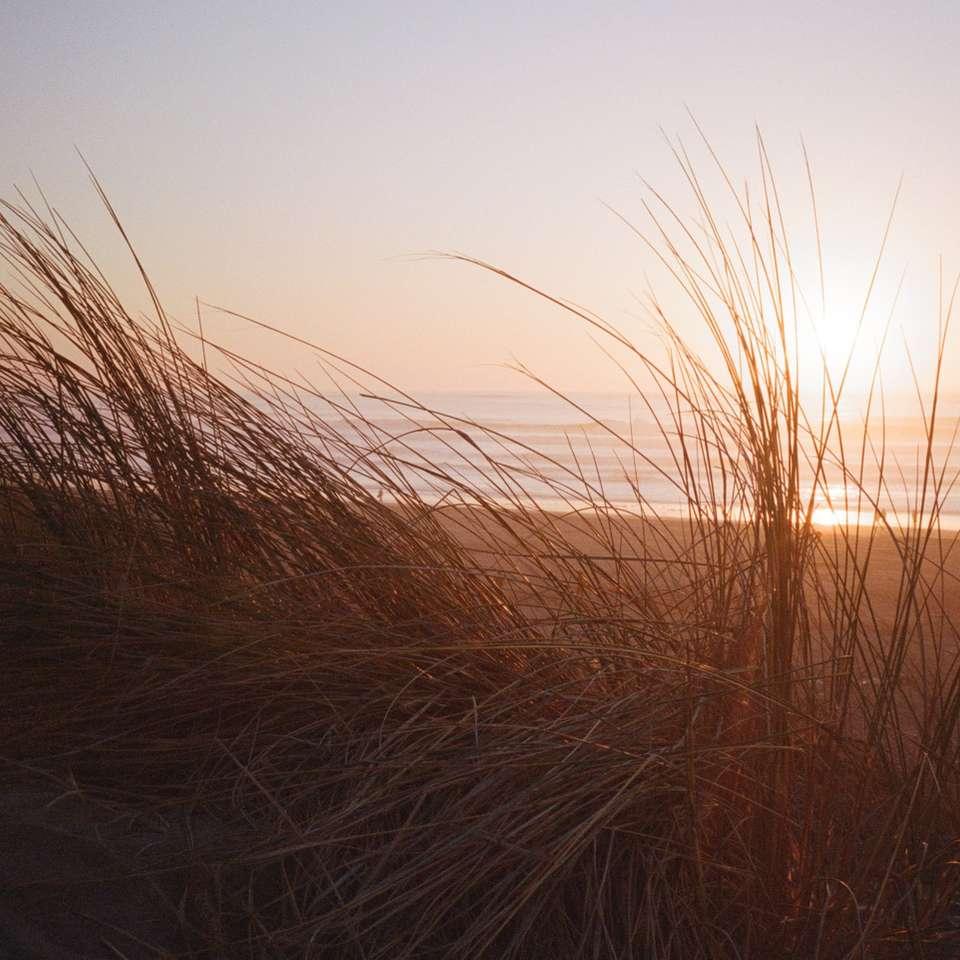 Dune grass - 12/2020