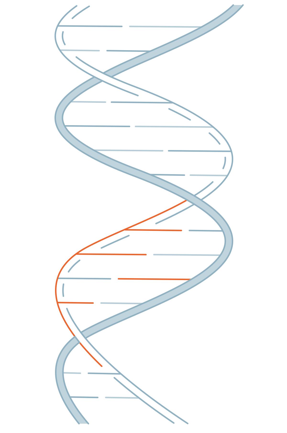 Diagram/alternate image for video of Gene.