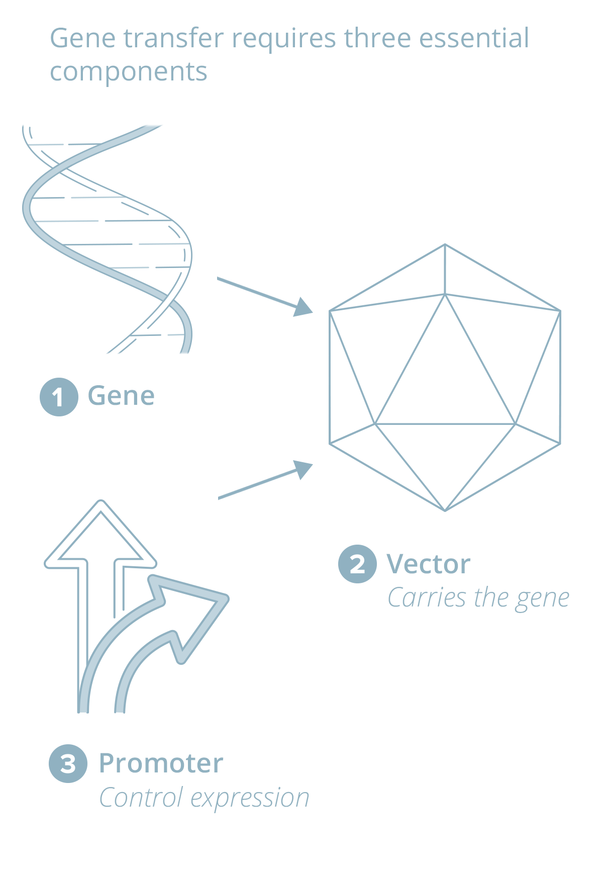 Diagram/alternate image for video of Gene Therapy.