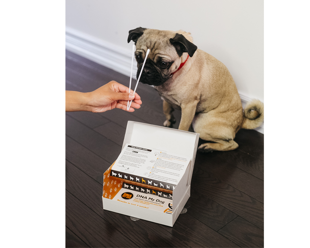 DNA Breed Identification Kit - 2 Pack
