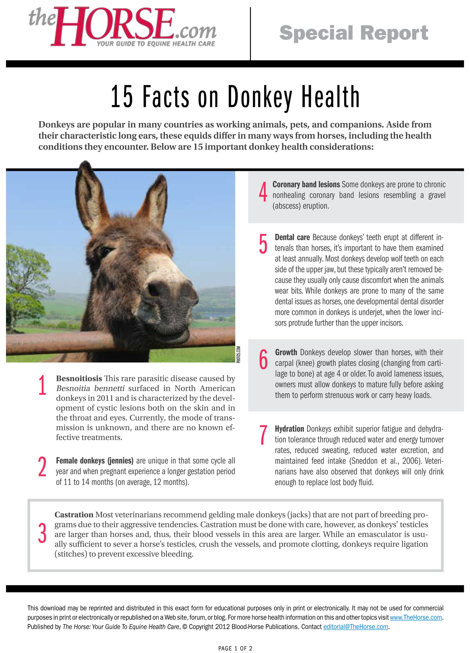 15 Facts on Donkey Health – The Horse