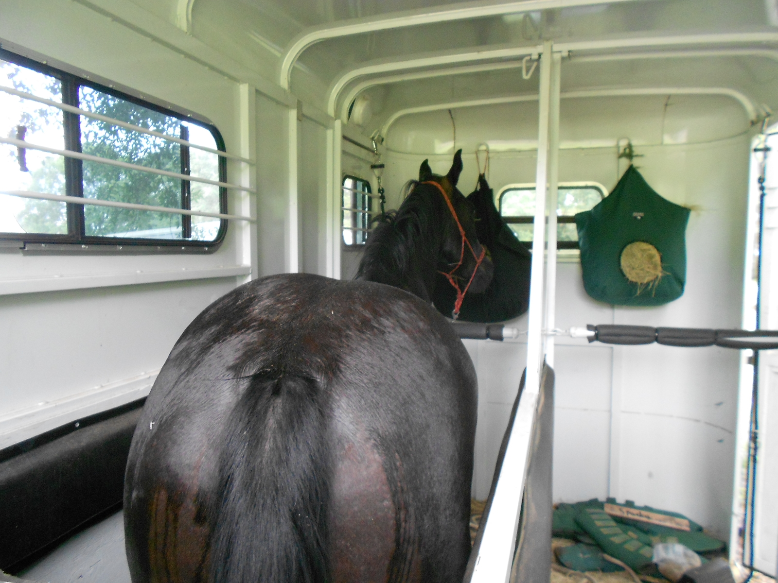 Disaster Preparedness and Planning: Part 2 – The Horse