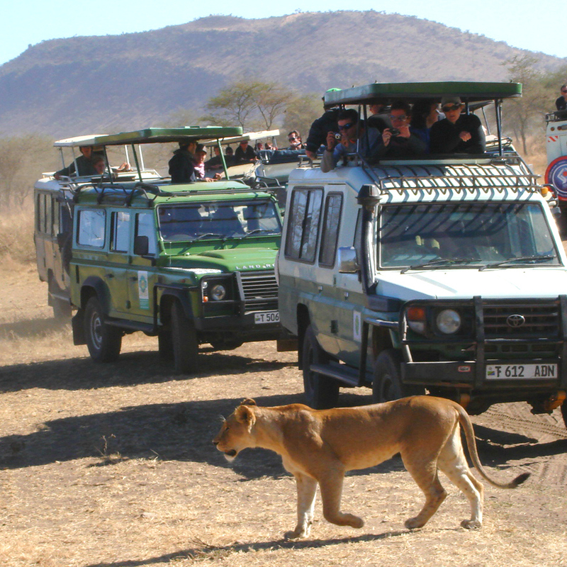 What to Pack for African Safari Tours