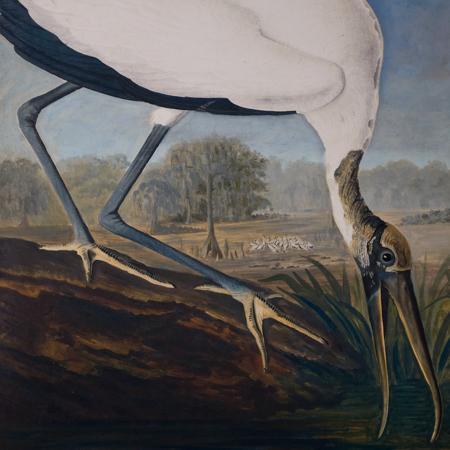 Audubon's Best Watercolors
