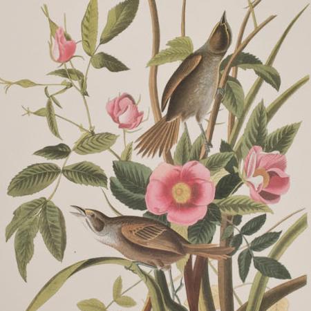 Audubon Abbeville