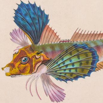 Donovan - British Fish