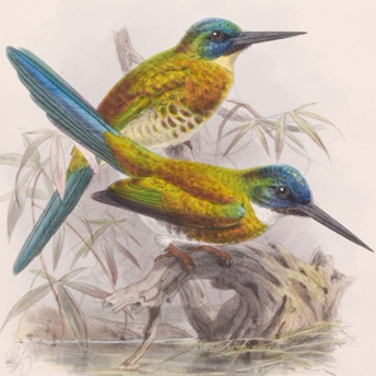 Sclater & Keulemans