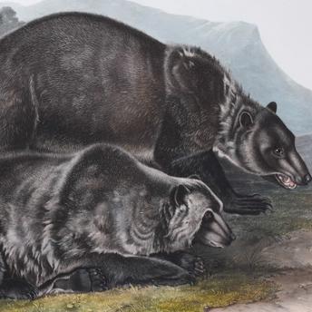 Audubon Folio