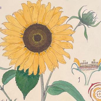 Original Watercolors from Zurich Botanical Garden