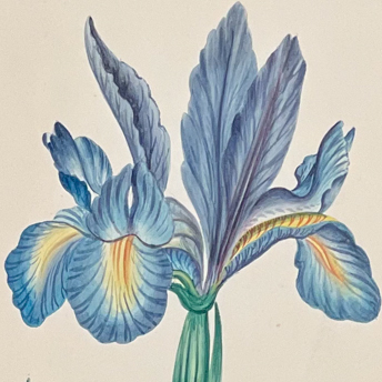 Original Botanical Watercolors