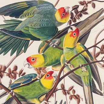 Audubon - Best Watercolors