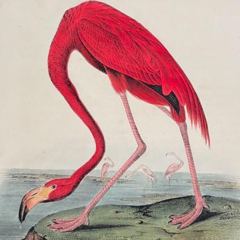Audubon - First Edition