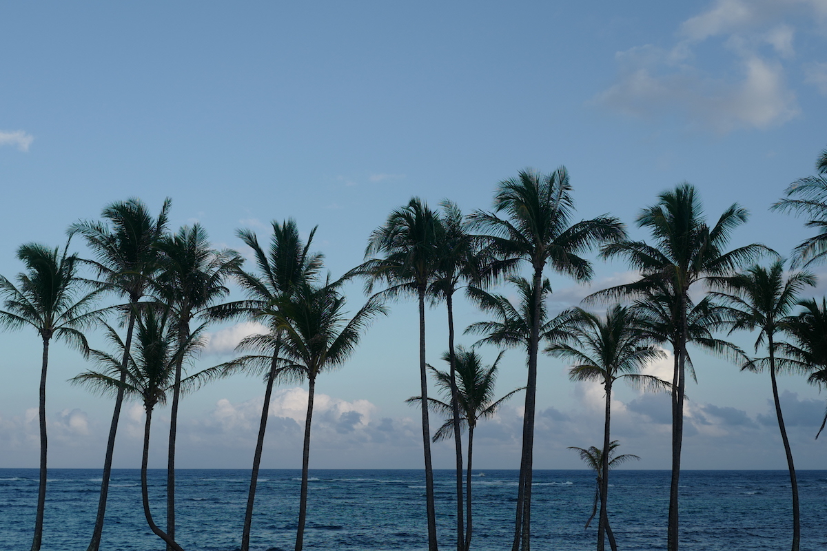 Palm Trees in Kauai