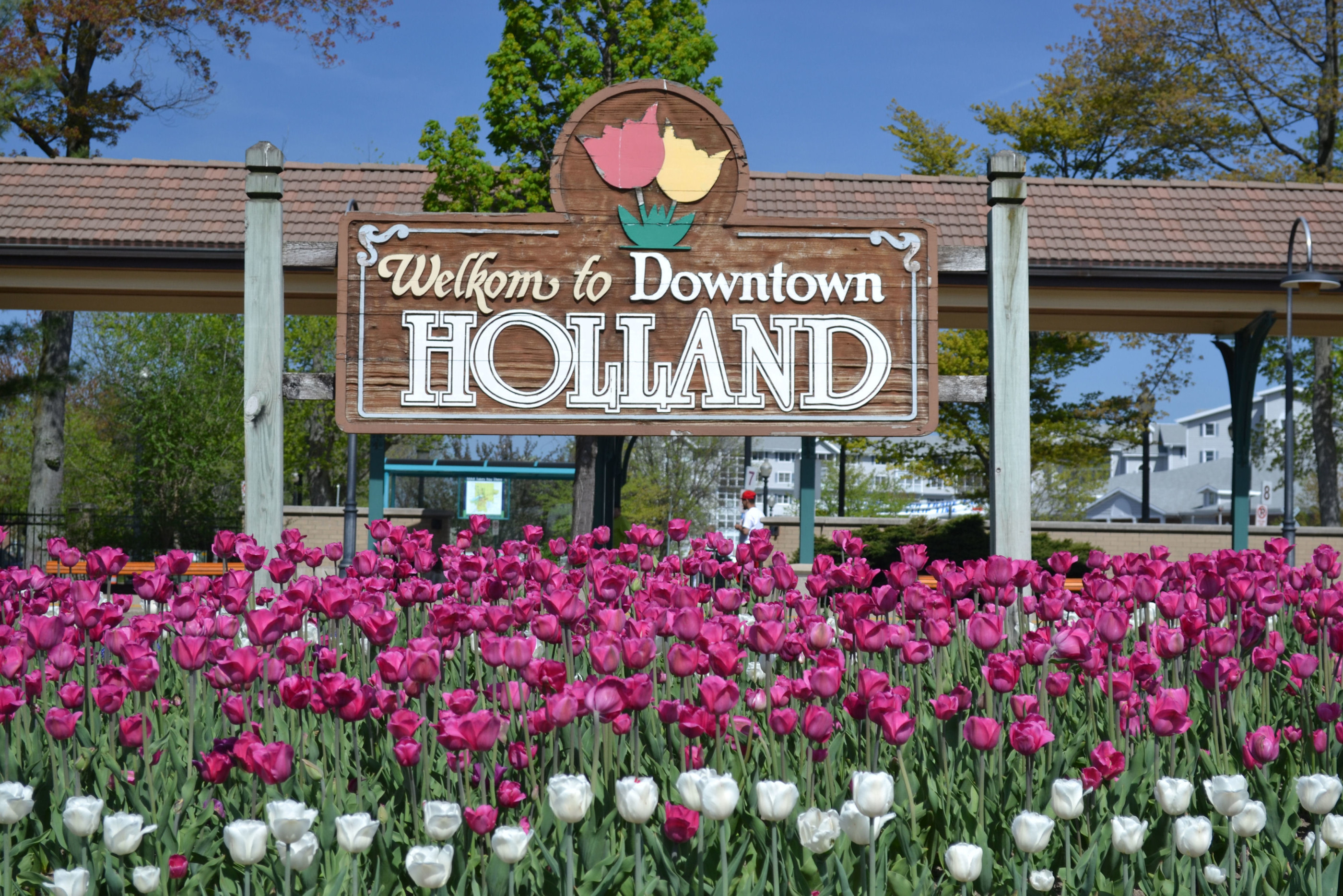 A patch of purple tulips in bloom in front of the Welkom to Holland sign
