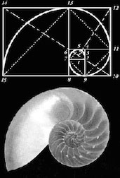 Golden Ratio Shell