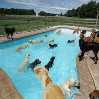 SwimmingWithTheDogs