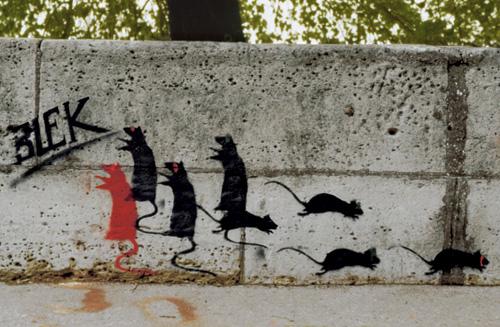 rat-1981-1