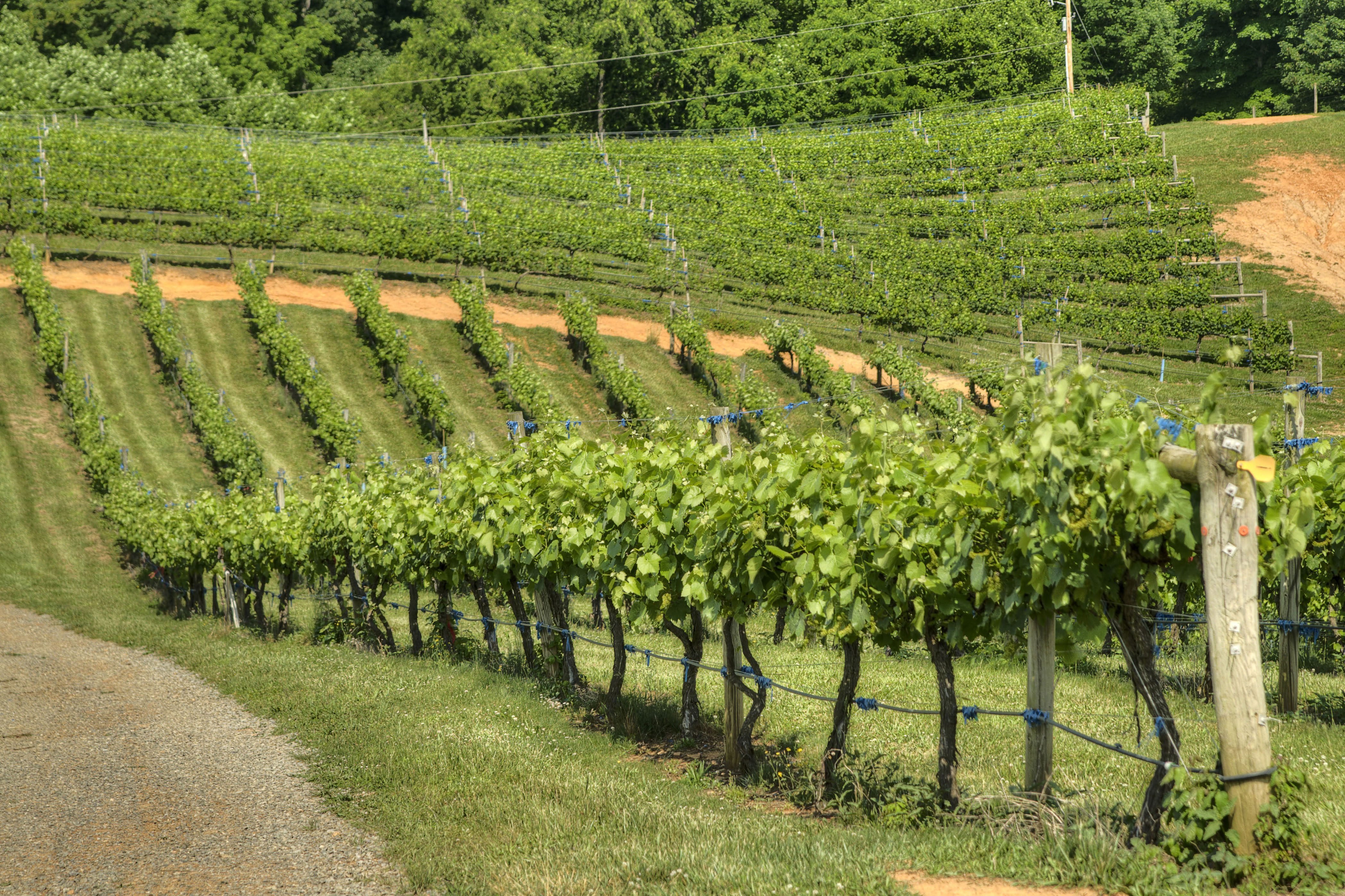 Abingdon Vineyard and Winery in Abingdon, VA