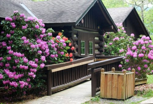 Cabin with rhododendron via Roots Rated
