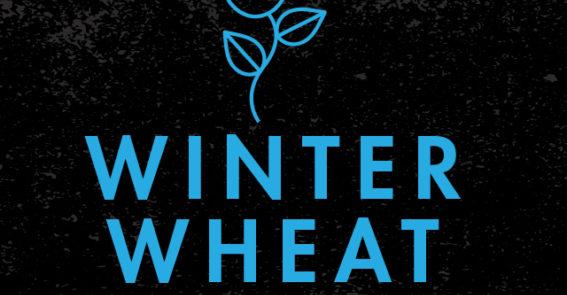 Winter Wheat