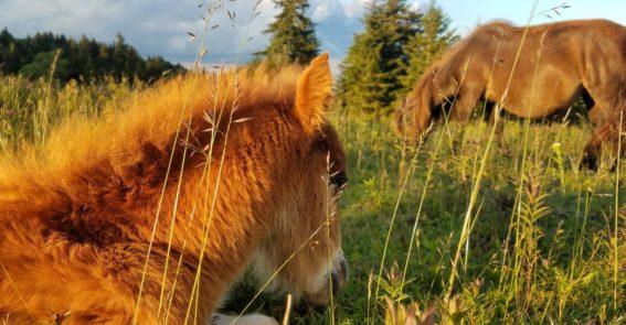 ponies source unknown