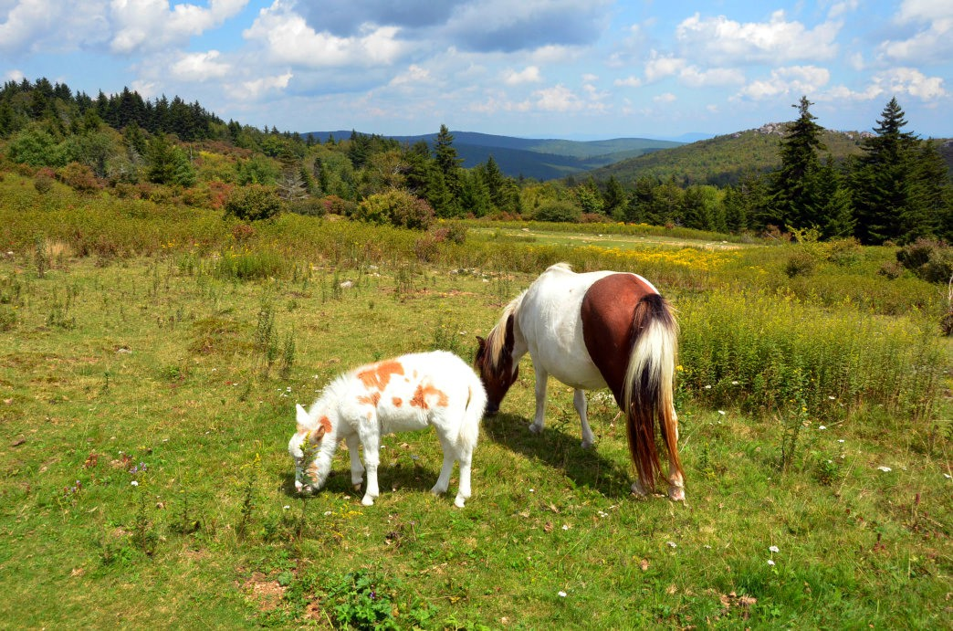00-20161222 Grayson Highlands Ponies