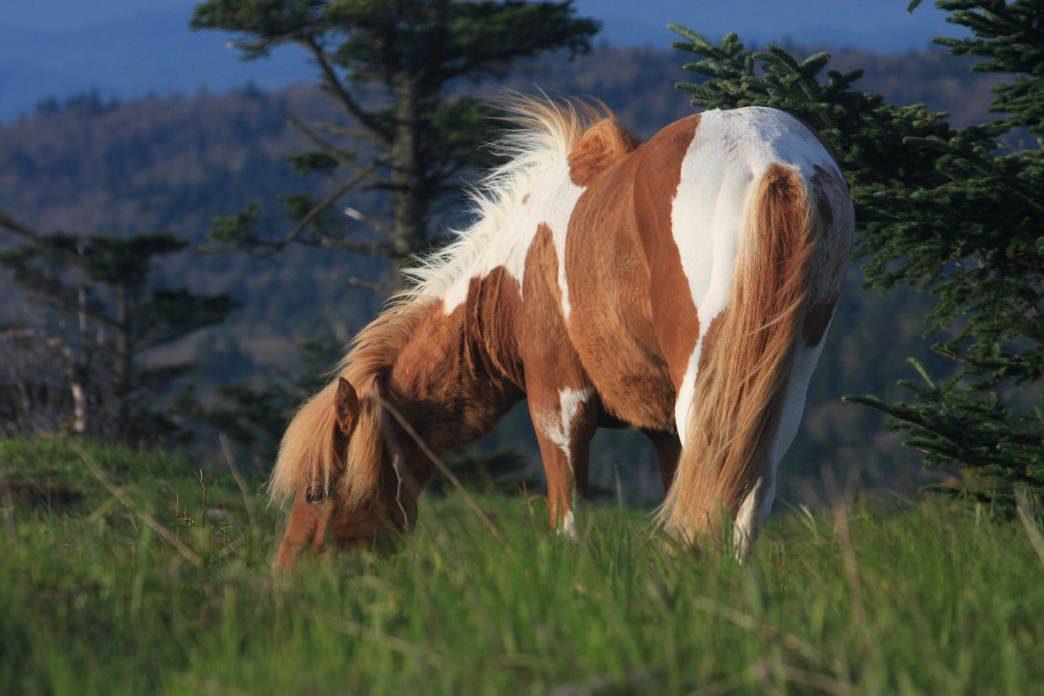 20170127 Virginia Ponies