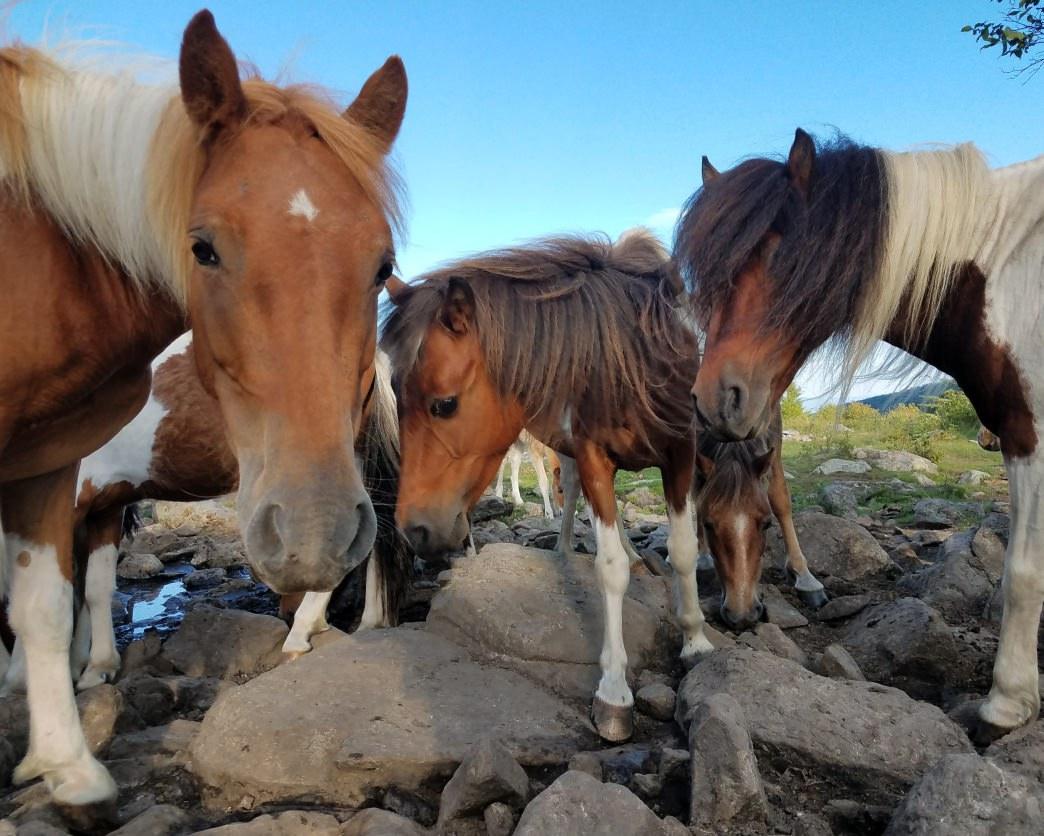 20180207-Virginia-Abingdon-Grayson Highlands State Park-Wild ponies