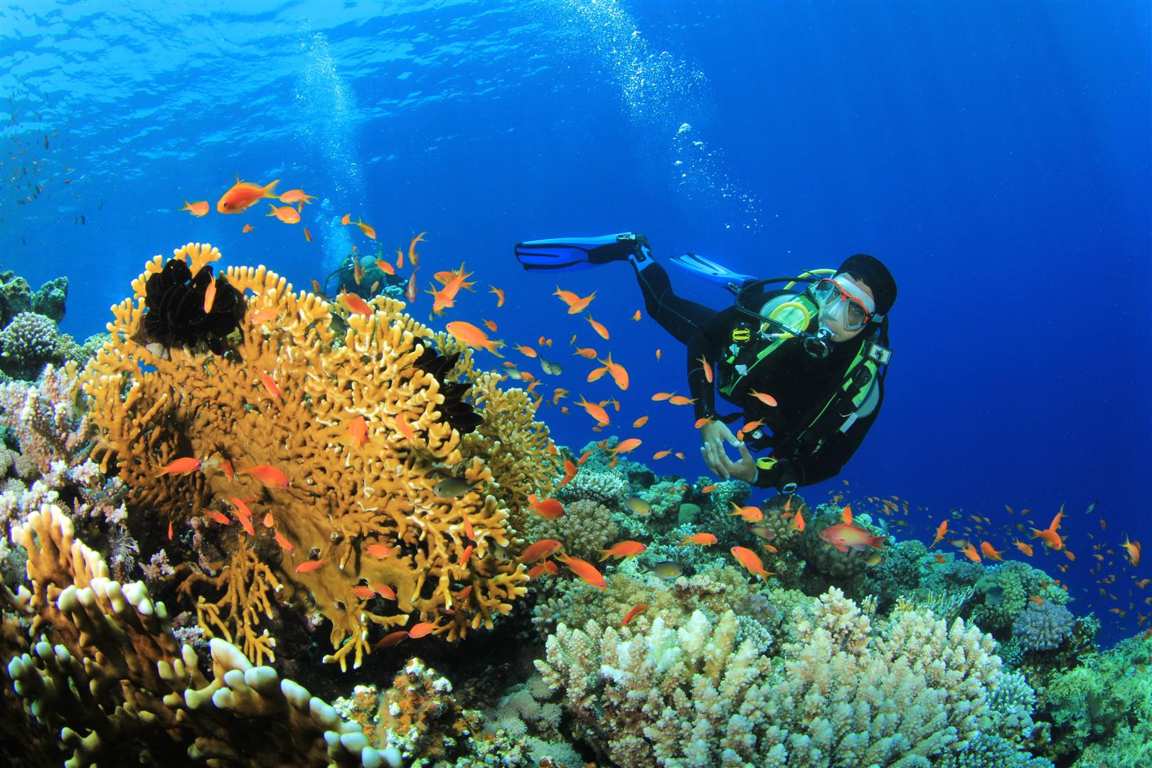 The best scuba-diving in India.