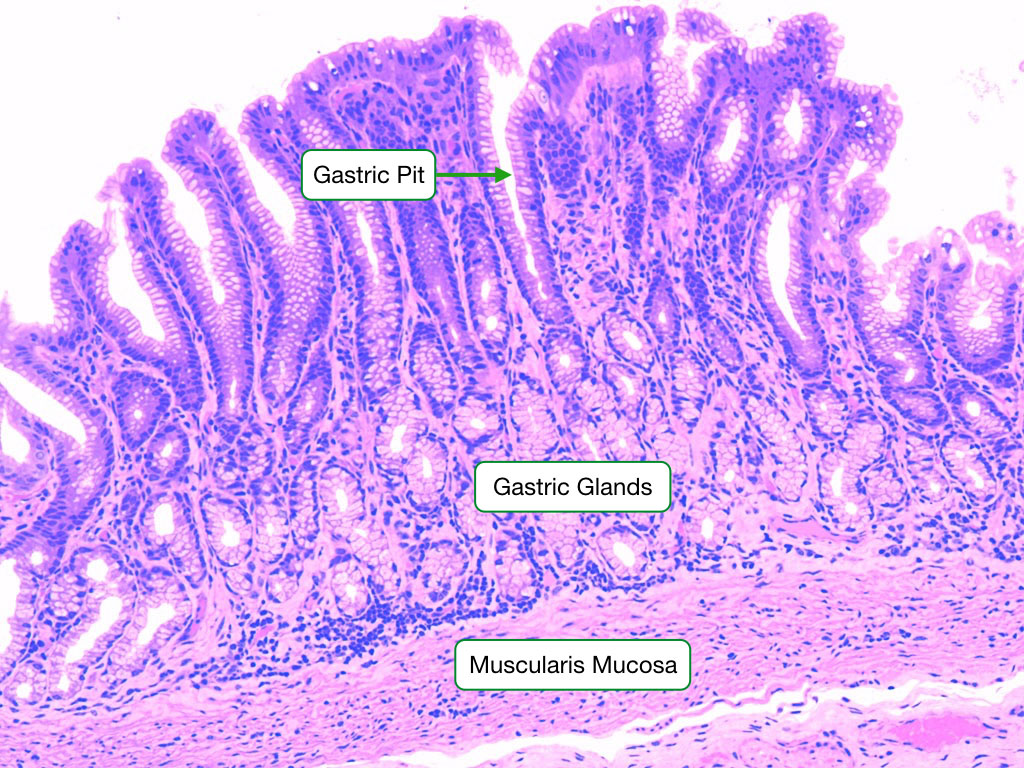 Gi Tract Readingp Lab