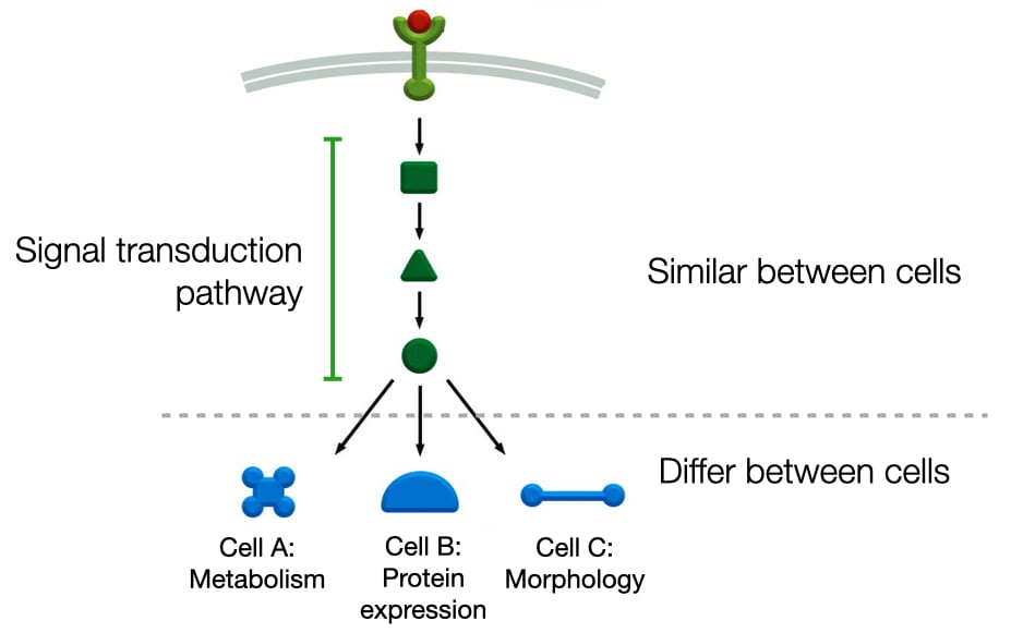 Diagram of how signaling pathways can trigger different events in cells.